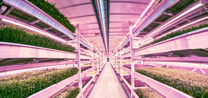 Zero Carbon Food is growing its vegetables deep beneath the streets of London. (Photo credit: Zero Carbon Food)