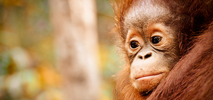 Indonesia's catastrophic forest fires are threatening unique wildlife. (Photo credit: Gemma i Jere, flickr)