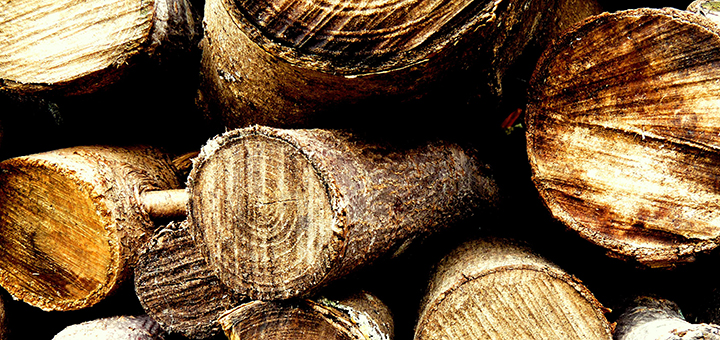 Europe's bioenergy plants are burning whole trees from protected forests to keep up with the EU's ambitious bioenergy targets. (Image credit: Les Haines, flickr/Creative Commons)